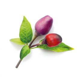 Click and Grow Smart Garden Refill 3-pack Plant: Purple Chili